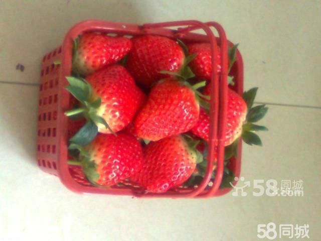 西瓜 香瓜/采摘西瓜、香瓜、草莓,好吃、好玩、实惠又新鲜