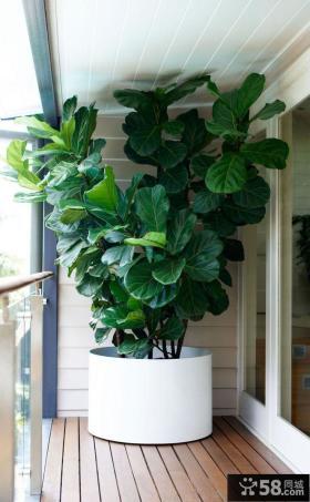 绿色家装阳台设计案例