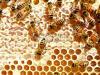 纯天然有机蜂蜜,上门自取可优惠,40一公斤<b style=